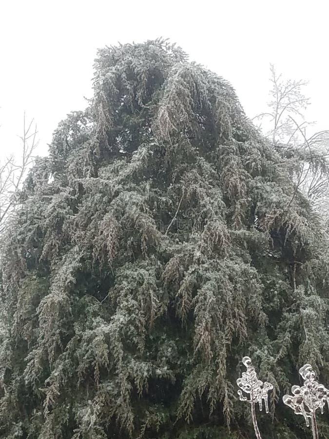 Icy-Weidenbaum lizenzfreie stockfotos