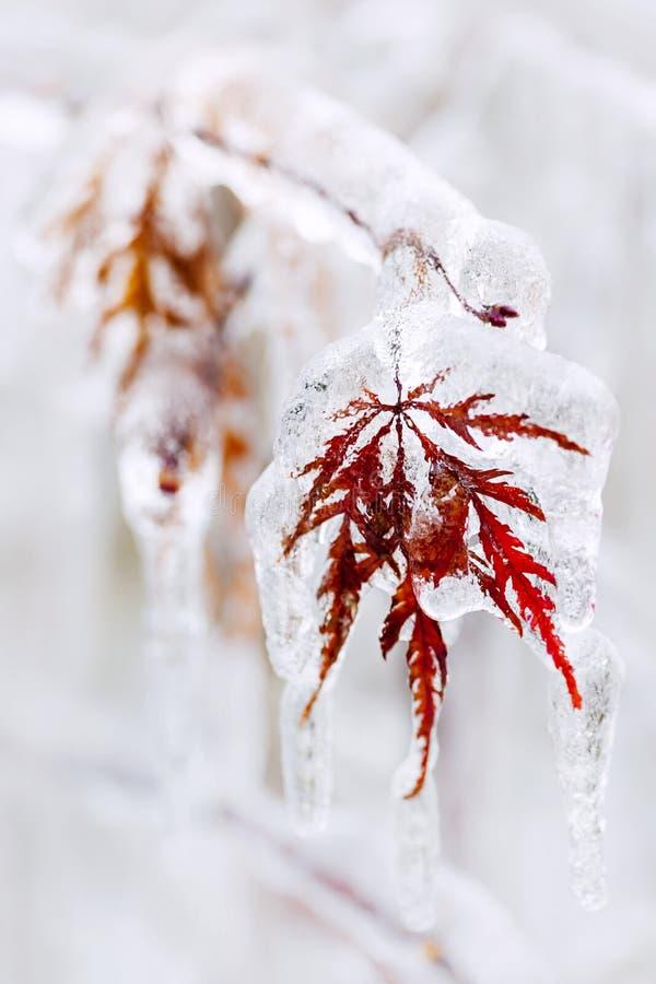 Icy winter leaf stock photos