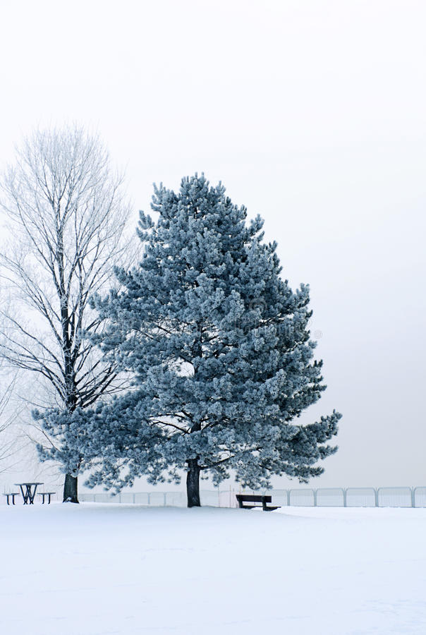 Icy winter scene royalty free stock image