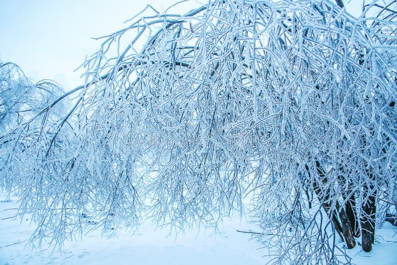 Download Icy winter tree stock photo. Image of frozen, north, broken - 83712336