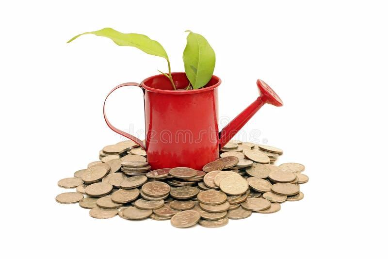 Idé av besparingar och pengarträdet som isoleras på vit arkivbild