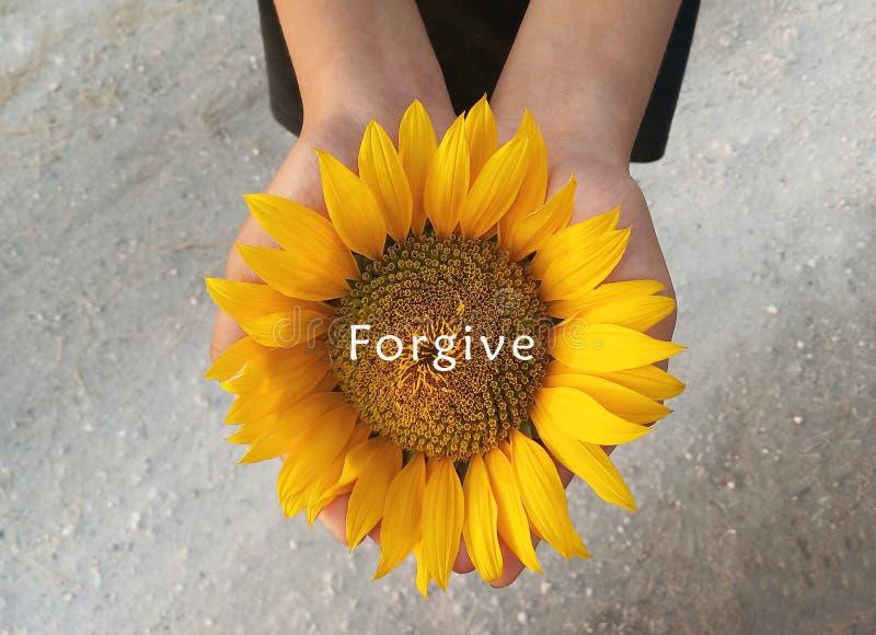 Idécitat - förlåtelse Med bakgrund av solrosblommor i öppna händer Att förmedla kloka ord arkivfoto