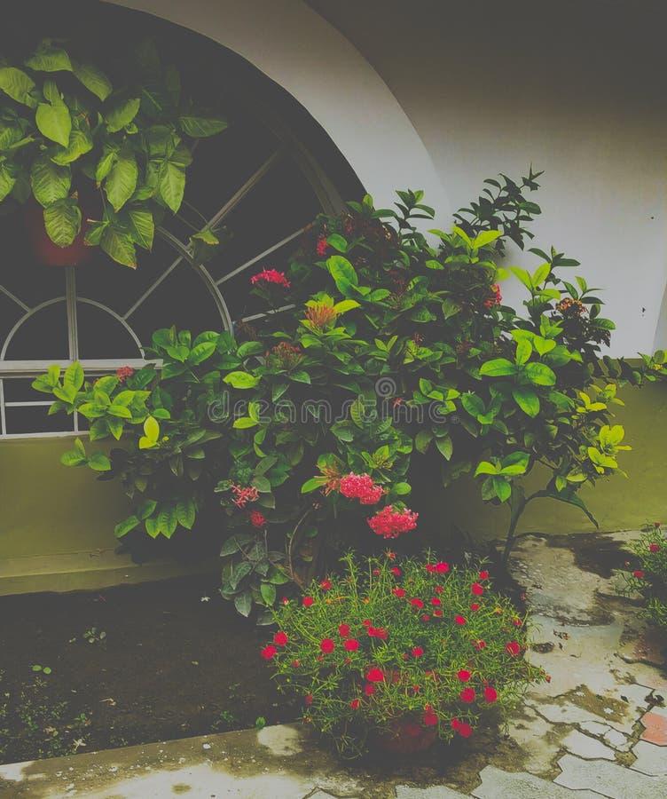 Idées à la maison de décoration de filon-couche de fenêtre avec les usines et le jardin photos libres de droits