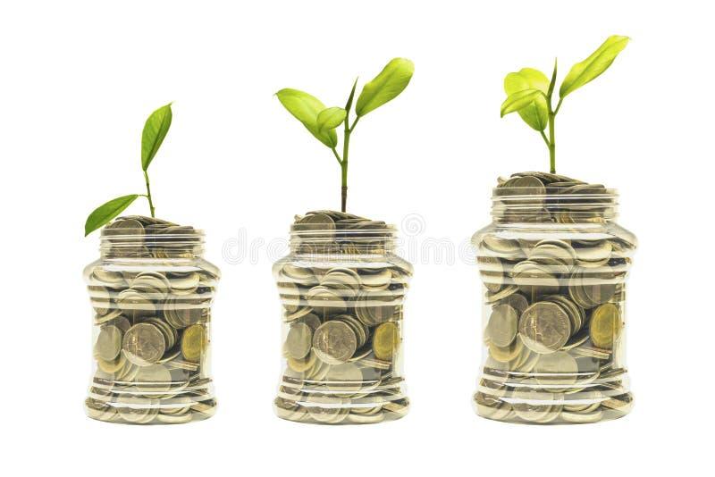 Idées, pièces en argent à une tirelire avec l'élevage d'arbres Chemin de coupure photos stock