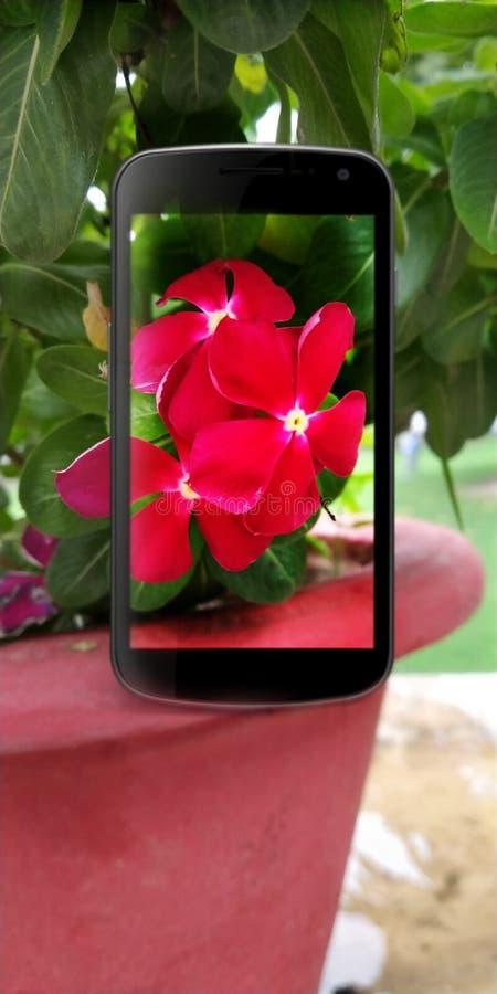 Idées quotidiennes de photographie, photoshop des fleurs du Madagascar dans des graphiques de vecteur de téléphone portable illustration de vecteur