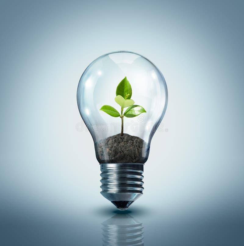 Idéia ecológica imagem de stock royalty free