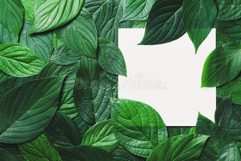 Idérik modell med det rena pappers- kortet och härliga gröna sidor med detaljerad textur Naturgrönskabakgrund royaltyfria bilder