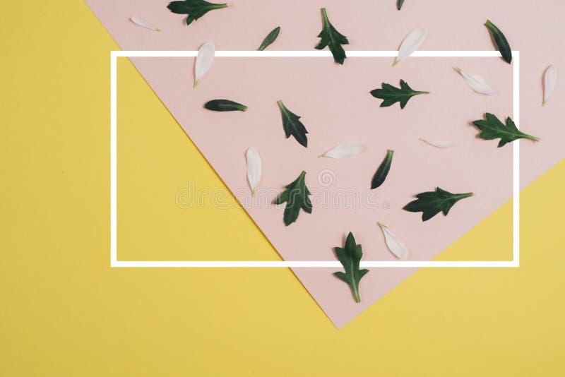 Idérik modell som göras av det vita kronbladet och gröna sidor på pastellfärgad rosa och ljust - gul bakgrund med den vita ramen  arkivbild