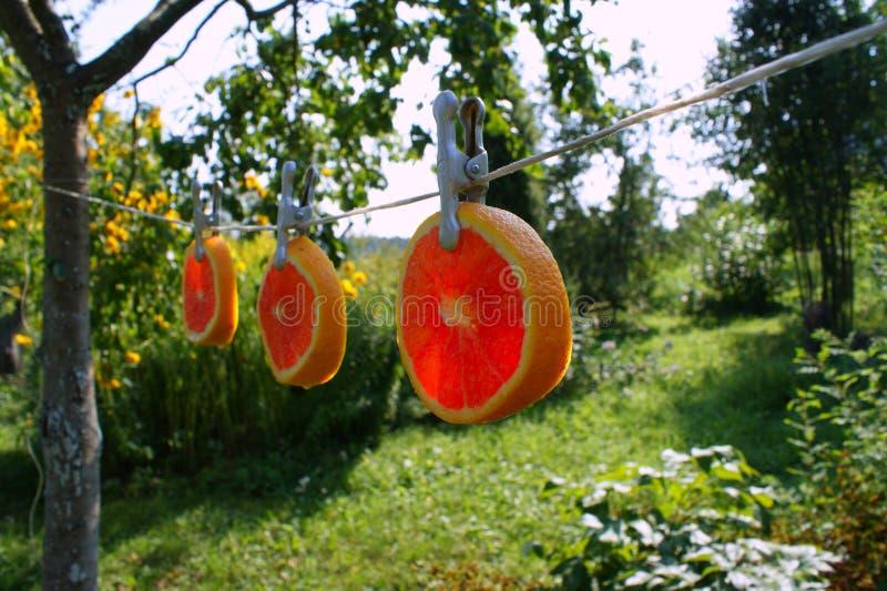 idérik orange arkivbilder