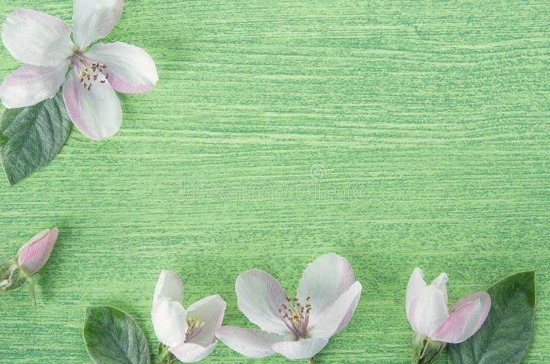 Idérik orientering som göras med rosa blommor för vårApple träd på ljust - grön trätabellbakgrund Lekmanna- l?genhet V?r fotografering för bildbyråer