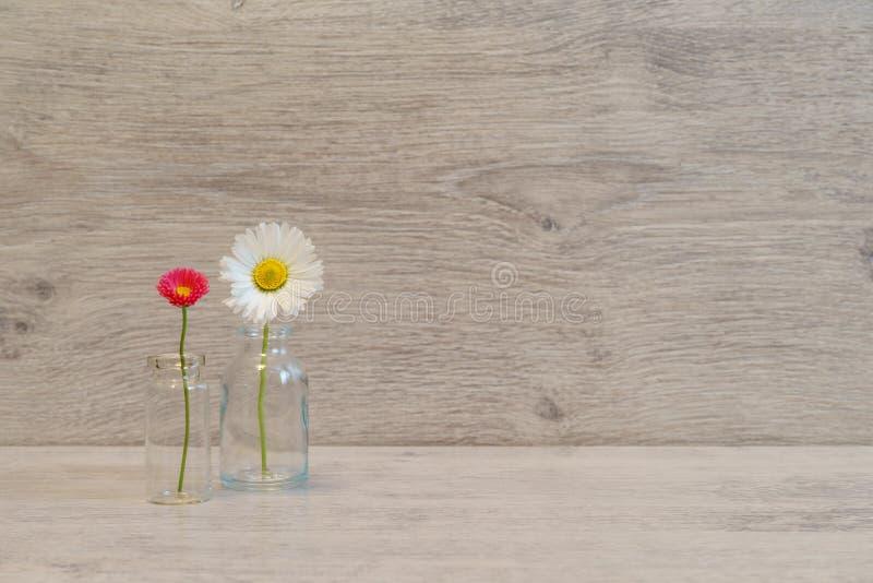 Idérik stilleben för sommar i minsta stil Vita och rosa Marg royaltyfria foton