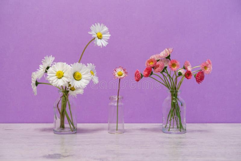 Idérik stilleben för sommar i minsta stil Vita och rosa Marg royaltyfri fotografi