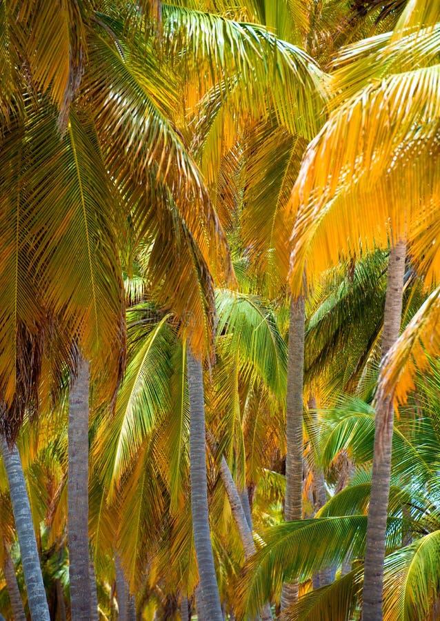 Idérik tropisk gräsplan lämnar orienteringen Naturvårbegrepp Lekmanna- lägenhet royaltyfri foto