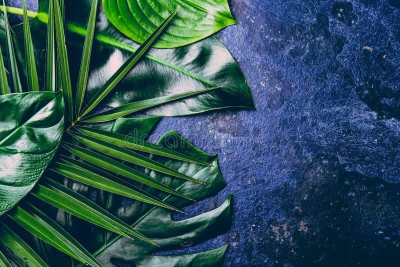 Idérik tropisk sidabakgrund Trandy kritiserar tropiska sidor på blått bakgrund - färg av året 2018 Top beskådar arkivfoton
