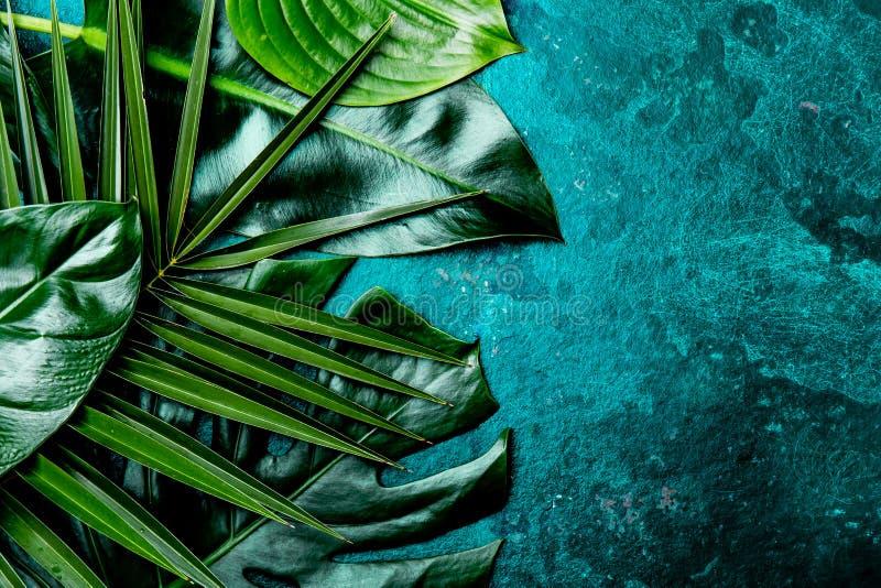 Idérik tropisk sidabakgrund Trandy kritiserar tropiska sidor på turkos bakgrund - färg av året 2018 överkant royaltyfri bild
