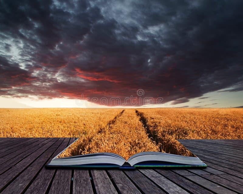 Idérika begreppssidor av boken som bedövar wheatfielden, landskap summa royaltyfri bild