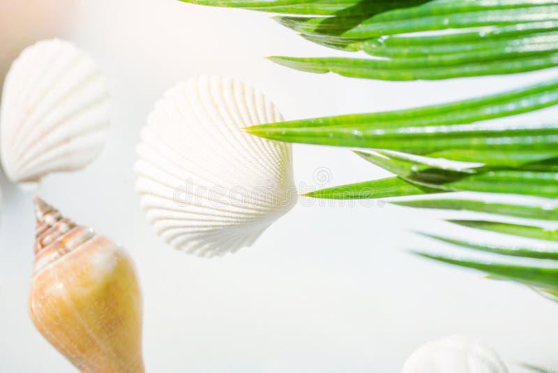Idérikt nautiskt begrepp för lopp för sommarwellnessbrunnsort Härliga havsskal av olika formfärger på pastellfärgad bakgrund fotografering för bildbyråer