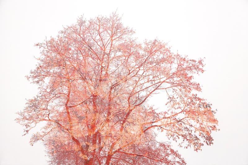 Idérikt träd på en vit bakgrund royaltyfri fotografi