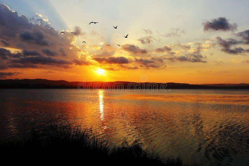 Idílio do lago no por do sol com voo das gaivota fotografia de stock