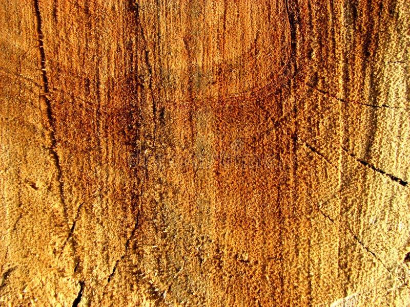Idade de uma árvore fotografia de stock royalty free