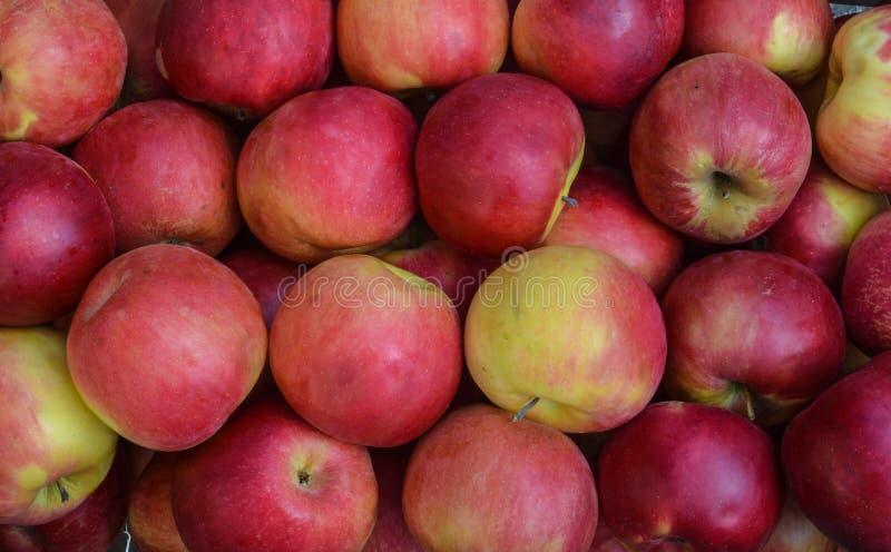Idared -红色和黄色苹果 库存图片