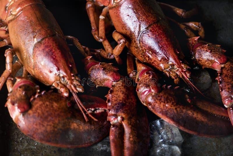 Idea cocinada de la receta de la fotografía de la comida de la langosta fotos de archivo libres de regalías