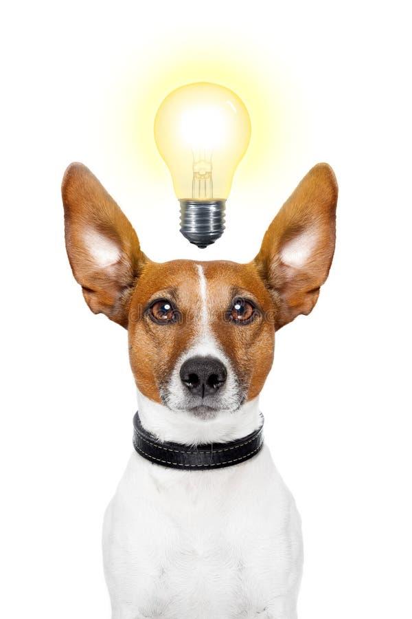 Idea del cane fotografie stock libere da diritti