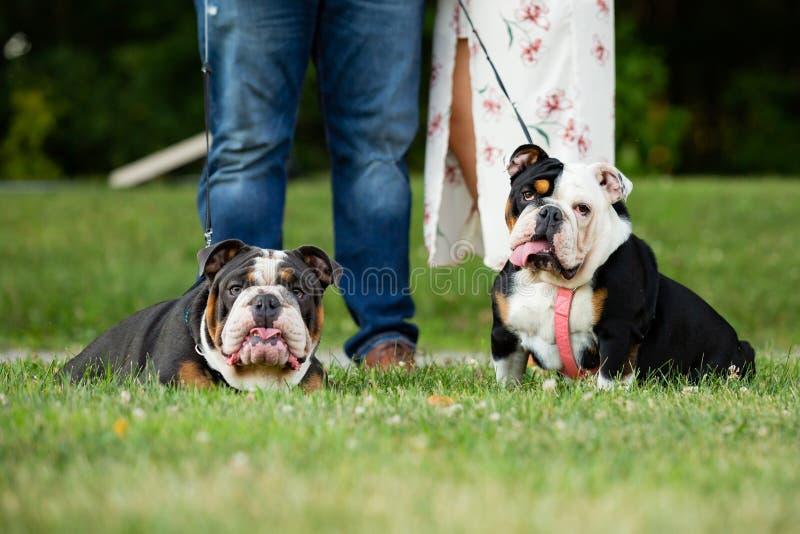 Idea della data che prende i cani per una passeggiata nel parco fuori immagini stock