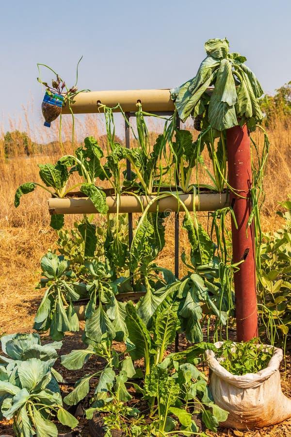 Idea económica para la jardinería vertical fotos de archivo