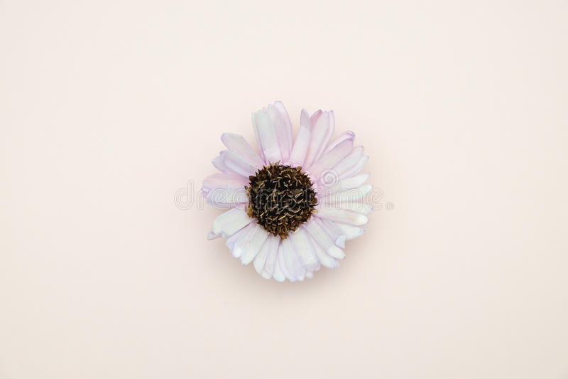 Idea. Flower on pink background with valentine concept royalty free stock photo