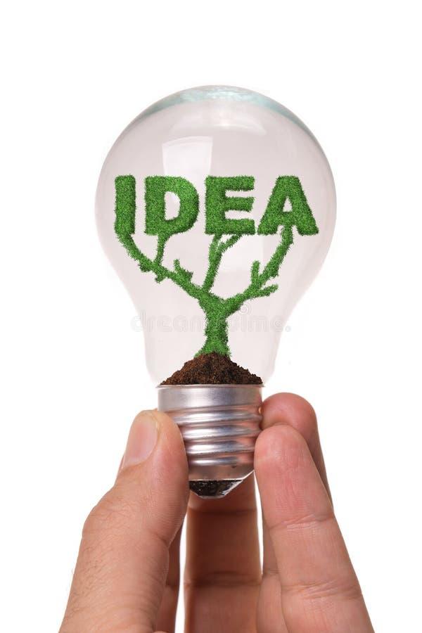 Idea grow in bulb. Idea word grow same plant in bulb stock image