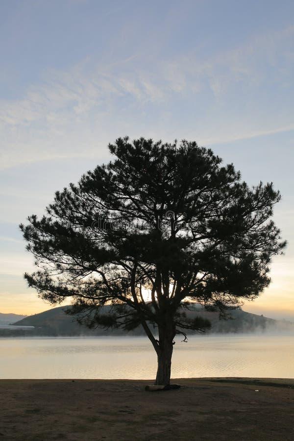 Idea unica con la riflessione sola dell'albero sulla parte 2 del cielo blu fotografie stock libere da diritti