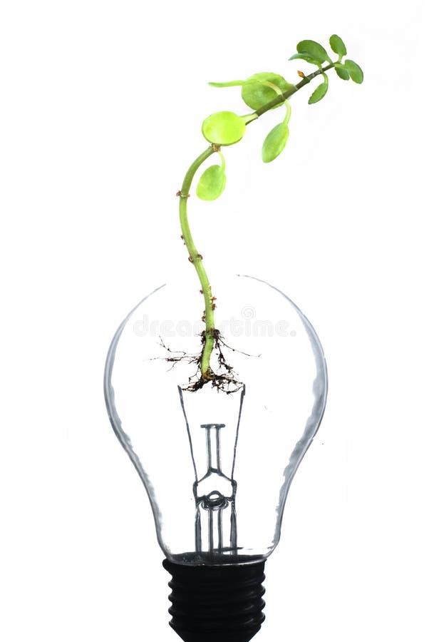 Idea verde fotografía de archivo