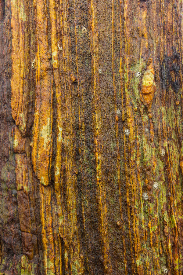 Ideeën voor het kleuren van kleren en stoffen Steen met bruine inkepingen en strepen stock afbeeldingen