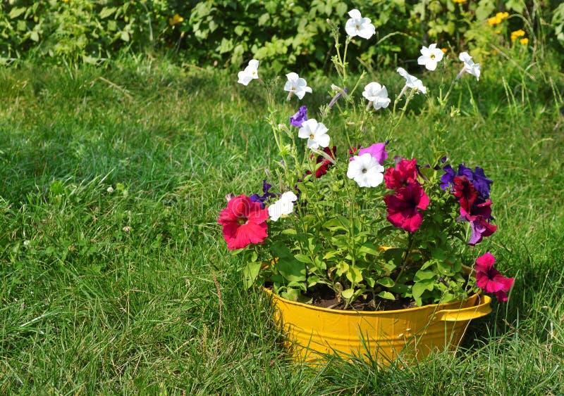 Download Ideen Für Garten   Blumen Im Waschbecken Stockfoto   Bild Von  Auslegung, Flora: