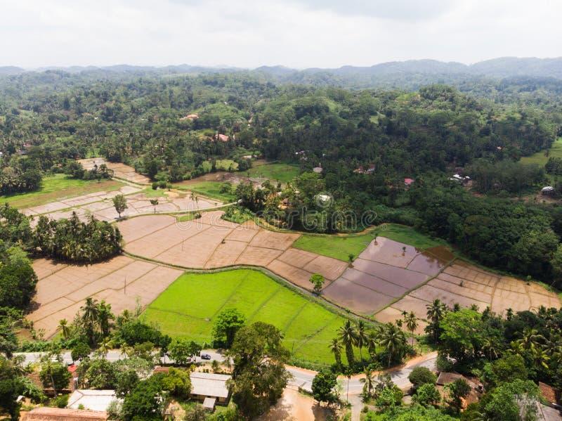 Ideia aérea da almofada, do arroz, dos campos, dos plams do coco e dos corpos colhidos da água, reservatórios do distrito fotografia de stock