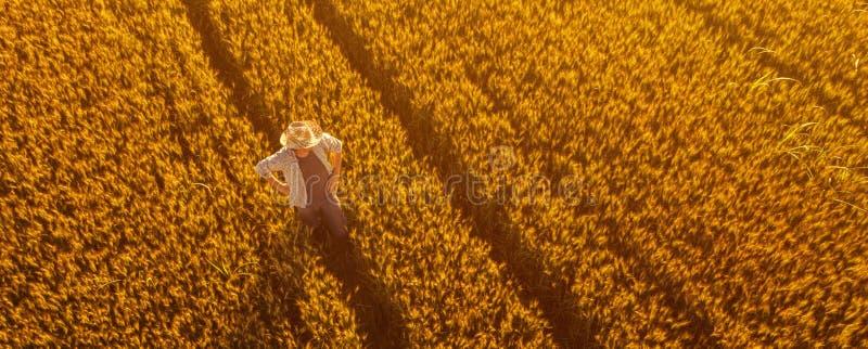 Ideia aérea da posição do fazendeiro no campo de trigo maduro dourado foto de stock