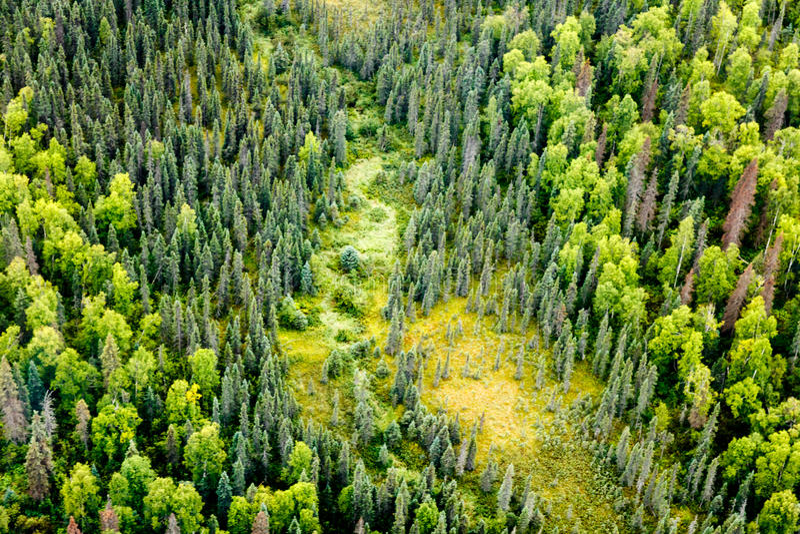 Ideia aérea da vegetação diferente da floresta do taiga imagem de stock