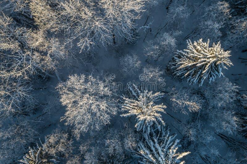 Ideia aérea de um por do sol bonito na floresta do inverno fotos de stock royalty free