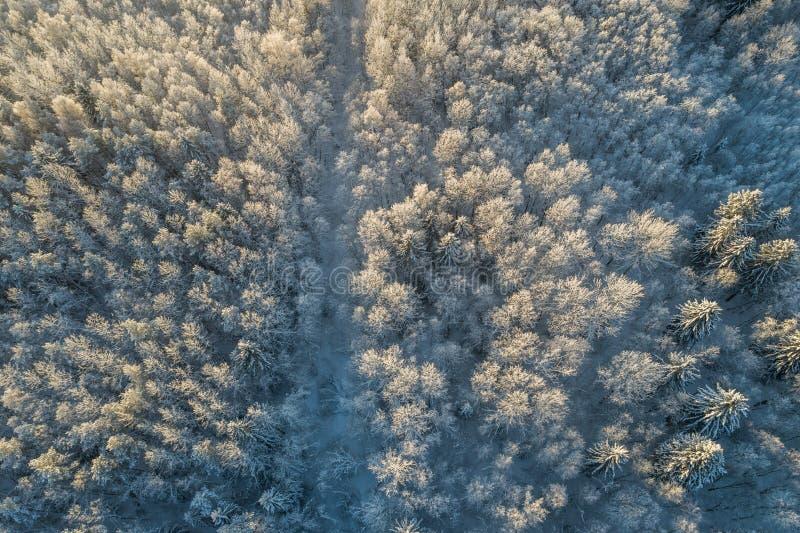 Ideia aérea de um por do sol bonito na floresta do inverno foto de stock