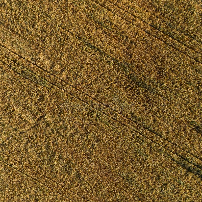 Ideia aérea do campo com colheita do outono foto de stock