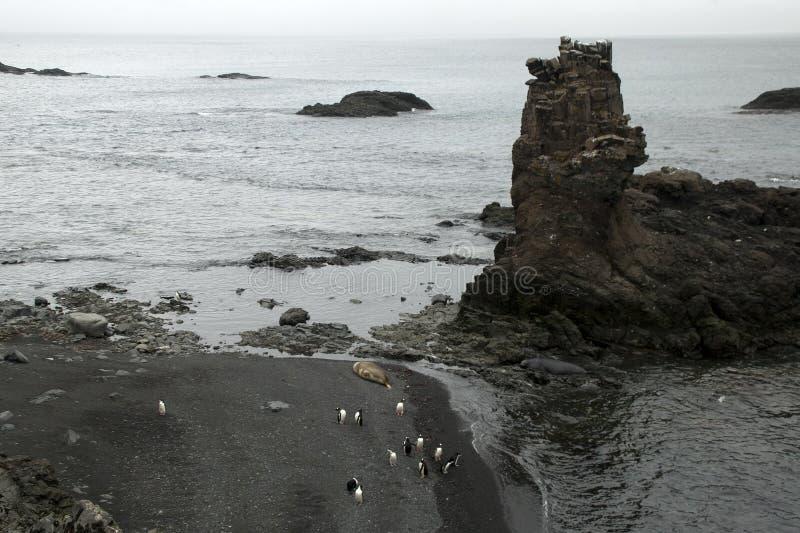 Ideia aérea dos pinguins e dos selos de elefante na praia foto de stock royalty free