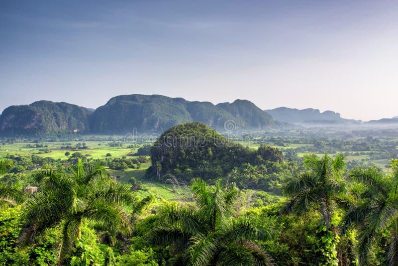 Ideia bonita da manhã de campos, de árvores e de mogotes verdes no vale Cuba de Vinales fotografia de stock royalty free