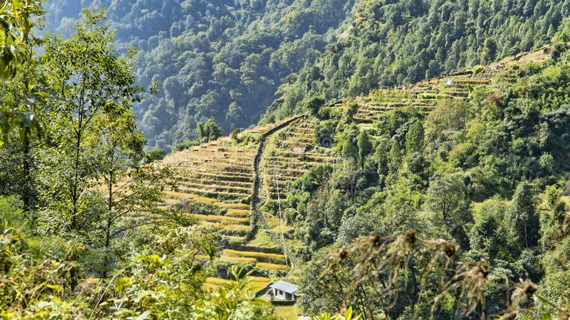 Ideia bonita da natureza em uma fuga trekking ao acampamento base de Annapurna, os Himalayas, Nepal Paisagem da montanha dos Hima imagem de stock