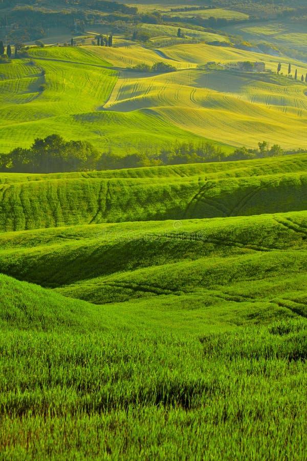 Ideia bonita de campos verdes em Toscânia imagem de stock