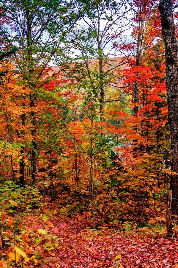 Ideia bonita e feericamente do outono em Quebeque fotografia de stock