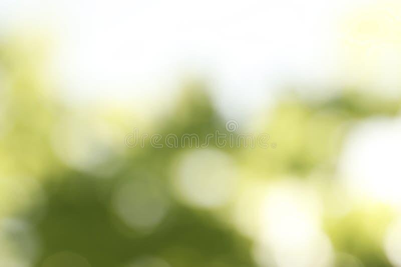 Ideia borrada do fundo verde abstrato Efeito de Bokeh imagem de stock royalty free