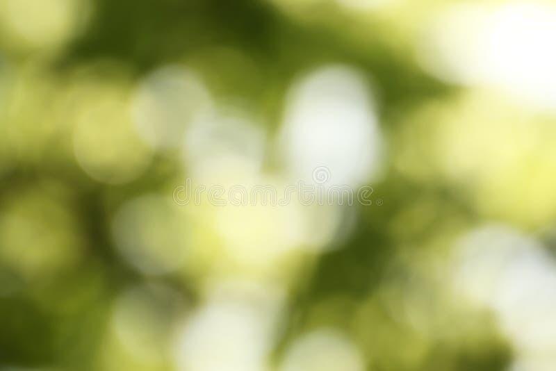 Ideia borrada do fundo verde abstrato Efeito de Bokeh imagens de stock royalty free