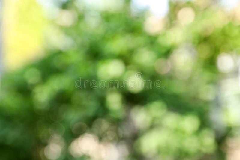 Ideia borrada do verde abstrato Efeito de Bokeh fotografia de stock royalty free