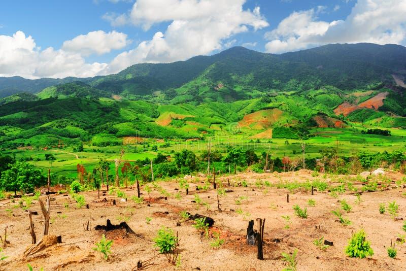 Ideia cênico de montanhas bonitas e de campos verde-claro do arroz fotos de stock royalty free